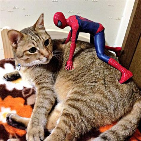 Spider-Man Is Actually A Cat Person   Bored Panda